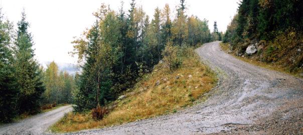 Foto van een omhoog slingerende bosweg